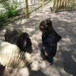 Zoo-champrepus-normandie kinderactiviteit
